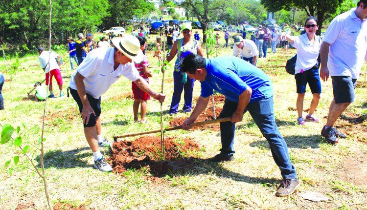 Plantio de árvores rotary (6)